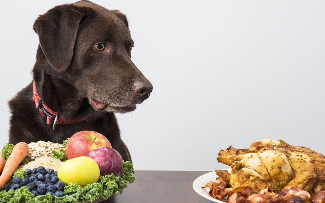 Vegan Dog Food: What You Need to Know