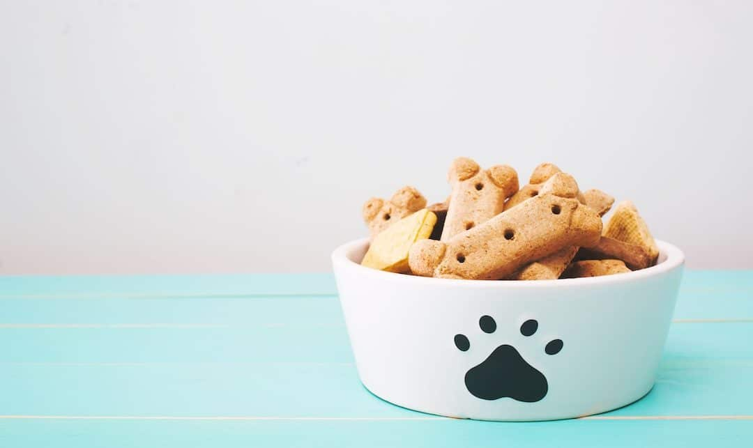 8 Best Dog Treats to Feed your Pup When you Follow A Vegan Lifestyle